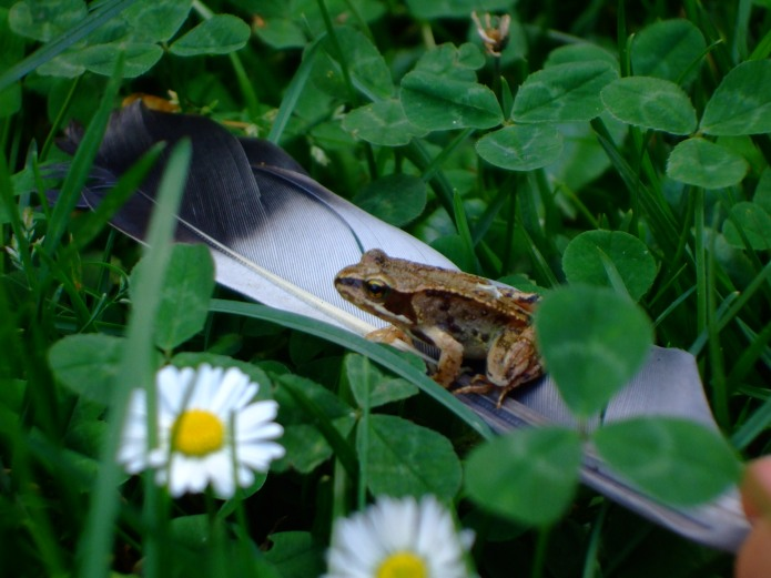 Of Frogs and Feathers
