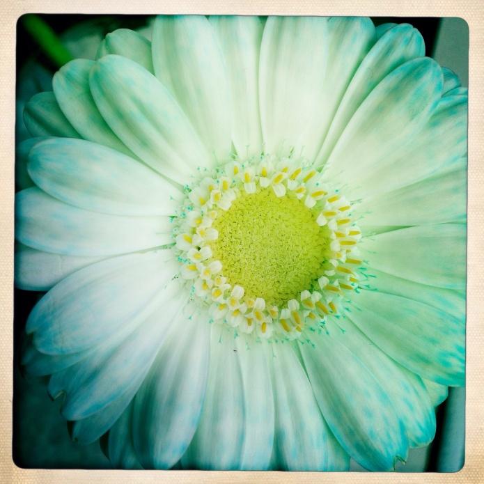 White flower blue