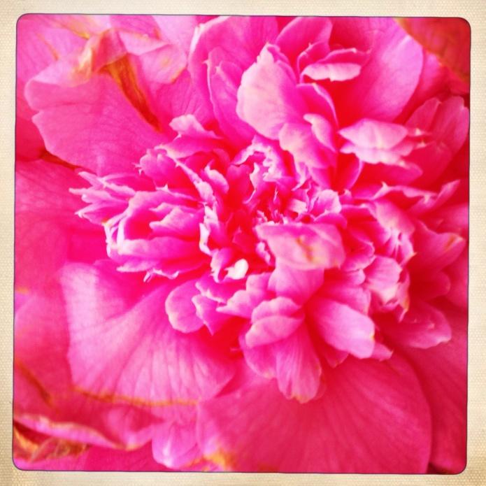 Pink kink