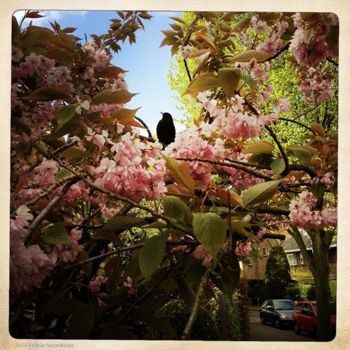 Blackbird Fairy Tale