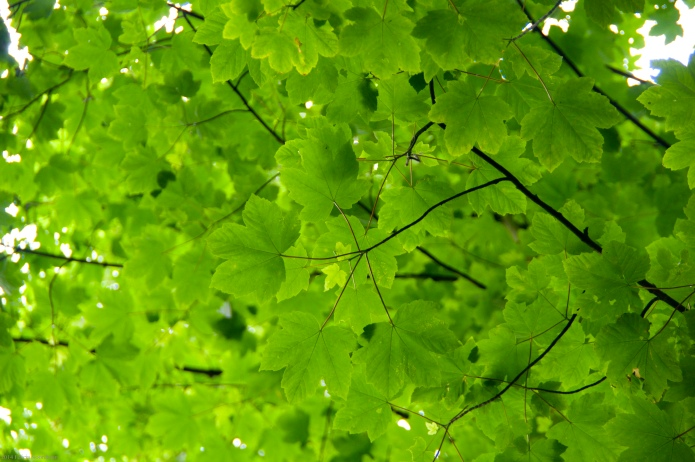 Greenestofgreen
