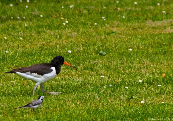 BigBird SmallBird