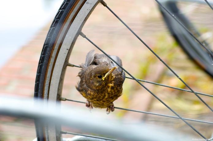 Fierce Bike Guard
