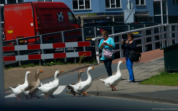 Goose Crossing Ib