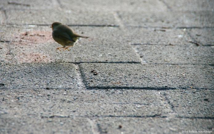 Robin I'm off