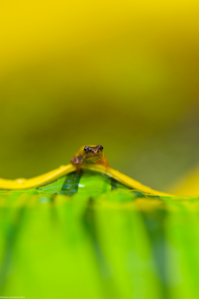 One moody Frog