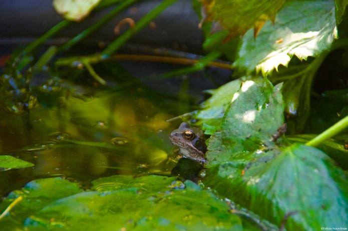Inez Frog