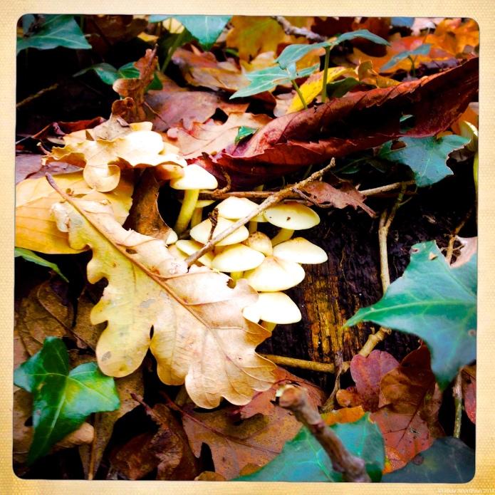 Hide 'n Seek Mushroom