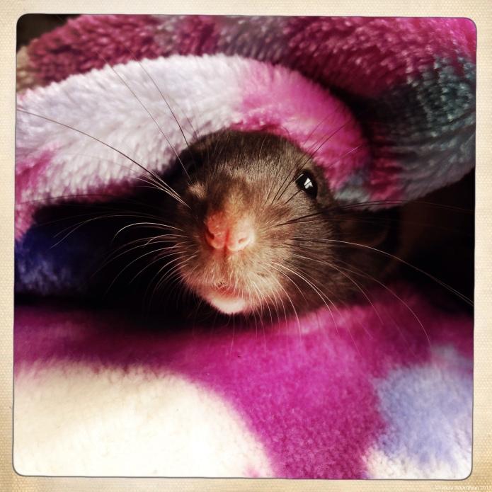 Peep Morning
