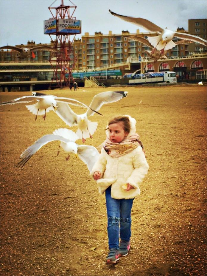 Scheveningen Birds