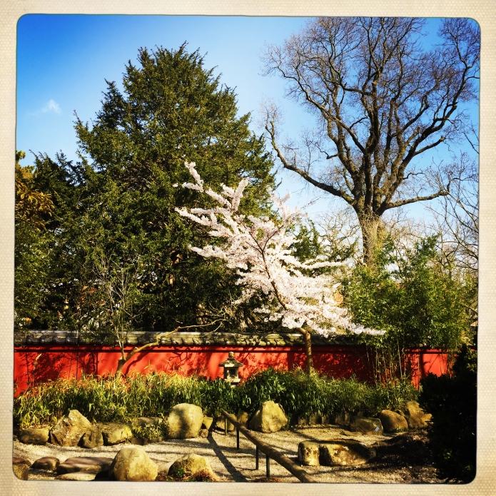 Hortus Von Siebold
